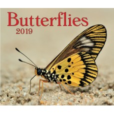 Butterflies 2019