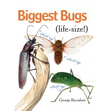 Biggest Bugs Life-Size